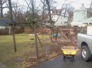 Before: broken-down grape arbor requiring removal.